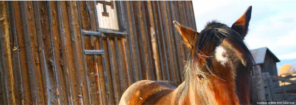 horse-BRLT